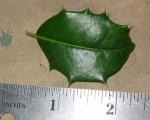 Leaf size