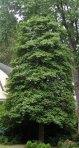Tree form